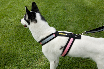 Alpine Outfitters Urban Trail Adjustable Harness-10536