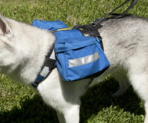 Alpine Outfitters Urban Trail Adjustable Harness-10578