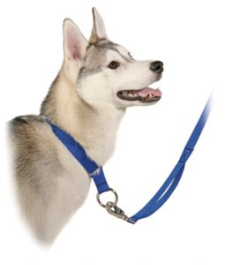 Alpine Outfitters Walking Leash with Traffic Handle-10540