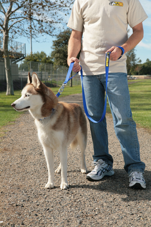 Alpine Outfitters Walking Leash with Traffic Handle-10539