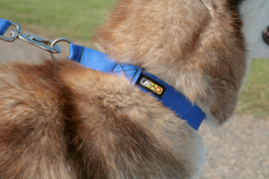 Alpine Outfitters Limited Slip Collar With Reflective Material-10537