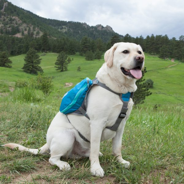 Outward Hound Day Pack-10661