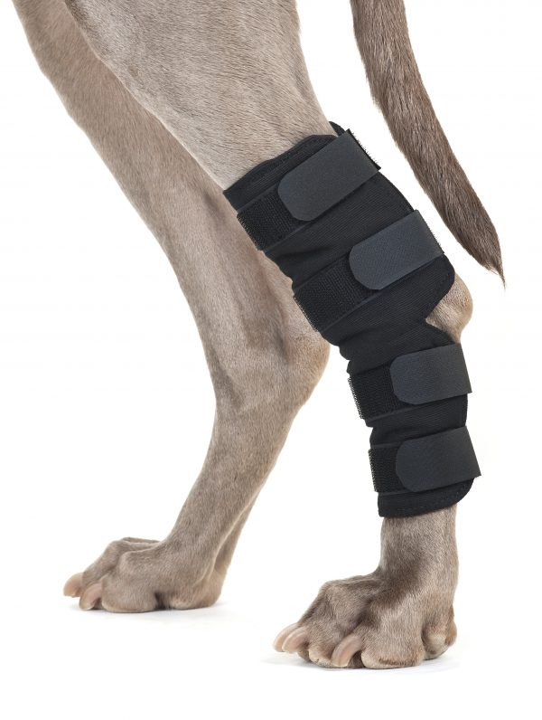 Back On Track Therapeutic Dog Hock Wraps-0