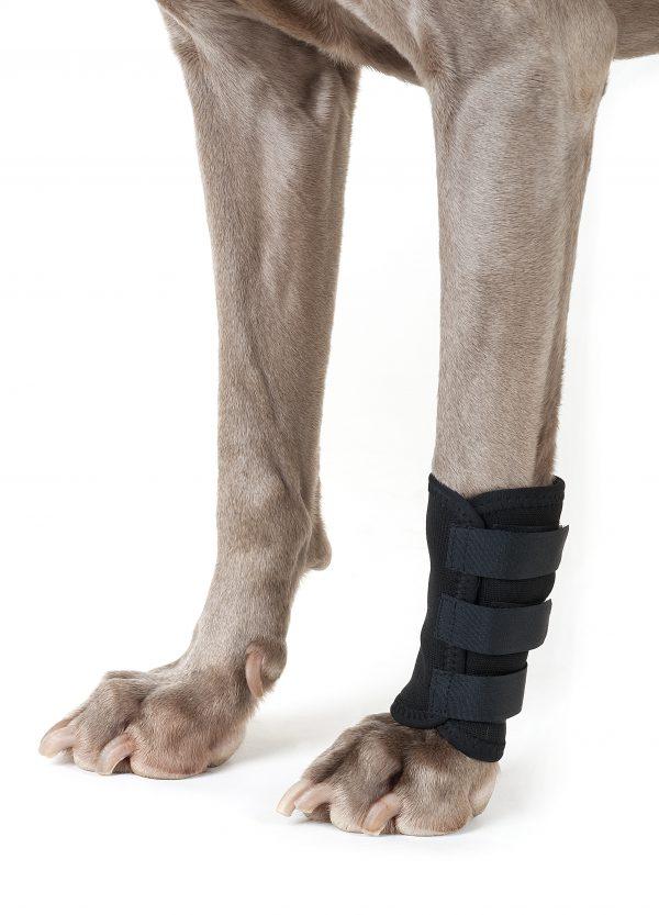 Back On Track Therapeutic Dog Leg Wraps -0